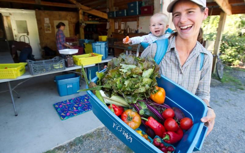 Z Harvest Basket